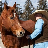 Quarterhorse Mix for adoption in Santa Rosa, California - Jazz