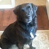 Adopt A Pet :: FERN - Odessa, FL