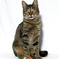 Adopt A Pet :: Juniper - Lufkin, TX