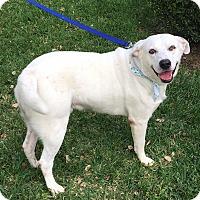 Adopt A Pet :: Enzo - Houston, TX