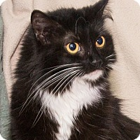 Adopt A Pet :: Ruby - Elmwood Park, NJ
