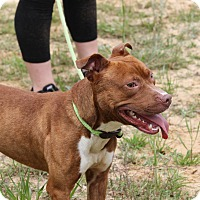 Adopt A Pet :: Adam - Macon, GA