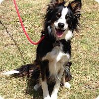 Adopt A Pet :: SCARLETT - San Pedro, CA