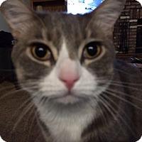 Adopt A Pet :: Bing - North Highlands, CA