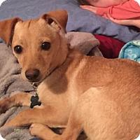 Adopt A Pet :: Jordan - Pearland, TX