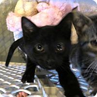 Adopt A Pet :: Travolta - Geneseo, IL