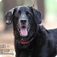 Adopt A Pet :: Ernie - Minneola, FL