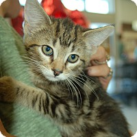 Adopt A Pet :: Mica - Great Mills, MD