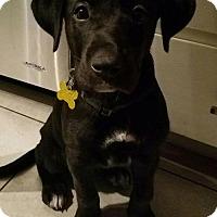 Adopt A Pet :: Dexxter - Salt Lake City, UT
