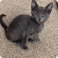 Adopt A Pet :: Ruby - Temecula, CA