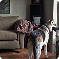Adopt A Pet :: Emme - Woodinville, WA