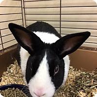 Adopt A Pet :: 1609-1717 Elsa - Virginia Beach, VA