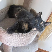 Adopt A Pet :: Bella Knight - Rochester, MN