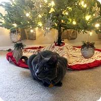 Adopt A Pet :: Elvis - Chandler, AZ