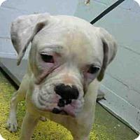 Adopt A Pet :: ZERO - Atlanta, GA