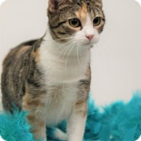 Adopt A Pet :: Clementine - Richardson, TX