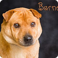 Adopt A Pet :: Barney - Somerset, PA