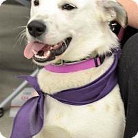 Adopt A Pet :: Marlo - Albemarle, NC
