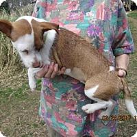 Adopt A Pet :: PEANUT - Brookside, NJ