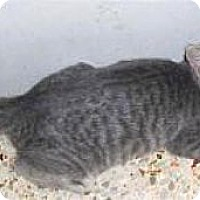 Adopt A Pet :: Peta - Miami, FL