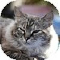 Adopt A Pet :: Pantages - Vancouver, BC