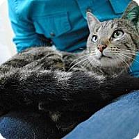 Adopt A Pet :: Cecilia - Paintsville, KY