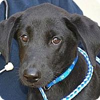 Adopt A Pet :: *Dillon - Westport, CT