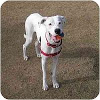 Adopt A Pet :: Scout - Phoenix, AZ