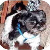 Adopt A Pet :: Max - Grove City, OH
