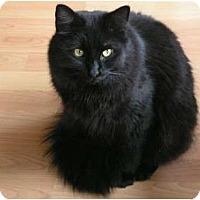 Adopt A Pet :: Morgan - Monroe, GA