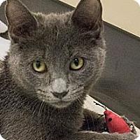 Adopt A Pet :: Ashton - Chicago, IL