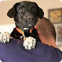 Adopt A Pet :: Roxy - Wakefield, RI