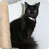 Adopt A Pet :: Saffron - Santa Rosa, CA