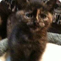 Adopt A Pet :: Cali - Toronto, ON