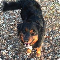 Adopt A Pet :: Bonnie - Elk River, MN