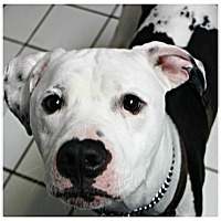 Adopt A Pet :: Remi - Forked River, NJ