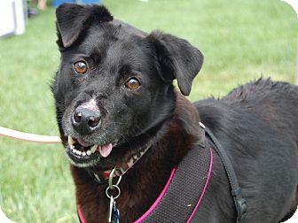 Labrador Retriever Mix Dog for adoption in Charlotte, North Carolina - Maggie Mae