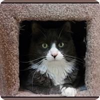Adopt A Pet :: Parkwood - Trevose, PA