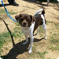 Adopt A Pet :: Ross - Lancaster, OH