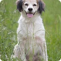 Adopt A Pet :: Lulu - Drumbo, ON
