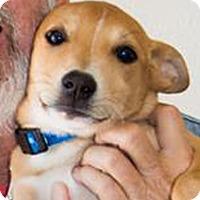 Adopt A Pet :: Honey - Patterson, CA