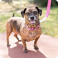 Adopt A Pet :: Coco - Peachtree City, GA