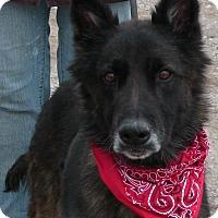 Adopt A Pet :: Keiser - Texico, IL