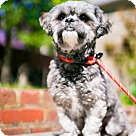Adopt A Pet :: Louie (Has application)