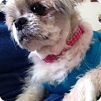 Adopt A Pet :: Bailey - Grand Rapids, MI