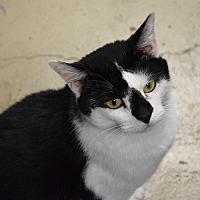 Adopt A Pet :: Bucky - Pottsville, PA