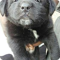 Adopt A Pet :: Fuzzy - Buffalo, NY