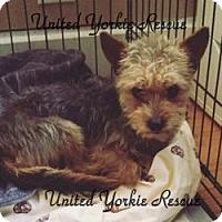 Adopt A Pet :: Munchkin - Long Beach, CA