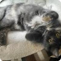 Adopt A Pet :: Becca - St Paul, MN