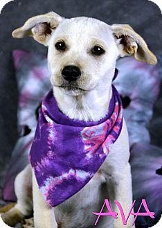 Labrador Retriever Mix Puppy for adoption in Jackson, Mississippi - Ava